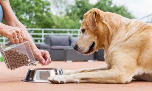 Как выбрать корм для связок, суставов и костей собаки